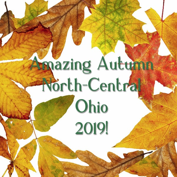 "A frame of autumn leaves with wording, ""Amazing Autmn North-Central-Ohio 2019"